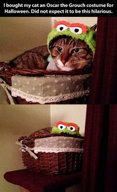 The best Oscar the Grouch costume // funny pictures - funny photos - funny images - funny pics - funny quotes - #lol #humor #funnypictures