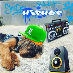 #hiphop #dog #partiyorkie #yorkies #yorkiepuppy #yorkieofintagram #lovemypuppy #puppiesofinstagram #puppies #bearfacepuppy #woofwoofpuppies #whatpet #purseyyorkie #lacyandpaws #bestwoof #instaanimals #cannabits by yves_lechien