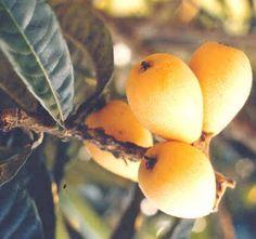 Criativa e Curiosa-ameixas amarelas-Brasil