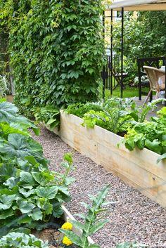 25+ parasta ideaa Pinterestissä: Moderni puutarha | Modernit puutarhat,Puutarhasuunnittelu ja ...