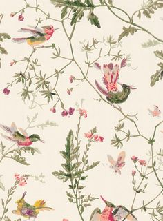 Hummingbirds - Designtapete von Cole & Son - cremeweiß