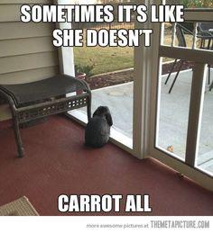 i love you bunny