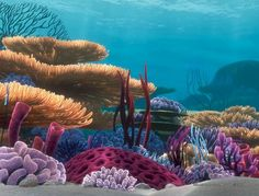 Image result for finding nemo coral reef