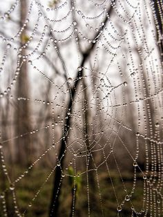 Wet spider web on Billy Goat Trail by Francis Sullivan. Prints $21 #web #maryland #wallart #homedecor #gifts