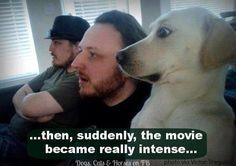 This is proof that you shouldn't watch Old Yeller or Marley and Me with your dog.