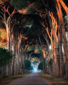 What a beautiful view in Tunnel trees of Natural Park Migliarino San Rossore in Italy from . Scenic Photography, Outdoor Photography, Nature Photography, Photography Tips, Photography Aesthetic, Enjoy Your Vacation, Natural Park, Foto Art, Most Visited