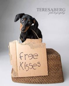 always tons of kisses... that's the Heart of a dachshund! :-)