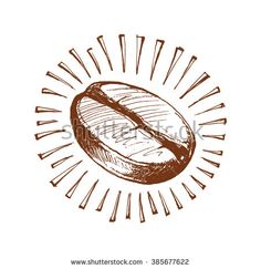 sketch of the coffee bean, painted coffee beans, vector illustration