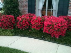 Hoping my bushes bloom as such!