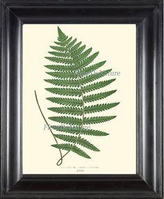 Beautiful Green Fern Print Botanical Art 9 by FleurDeNature