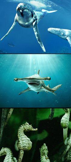 65ff06331f55 245 Best Ocean s Creatures images