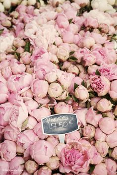 Peonies in a Paris market by Georgianna Lane