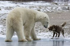 Estos Animales No Tienen Ningún Miedo