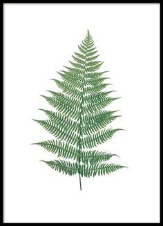 Print met plant - varen. Poster met een mooi varen. Deze mooie botanische poster is mooi samen met meerdere botanische posters naast elkaar. We hebben een groot assortiment prints en posters met botanische motieven. www.desenio.nl