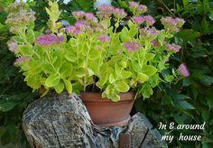 In & around my house : Autumn decoration ! Fall Decor, My House, Autumn, Decoration, Garden, Plants, Decor, Garten, Fall Season