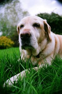 Achoo! Dealing with pet allergies this spring