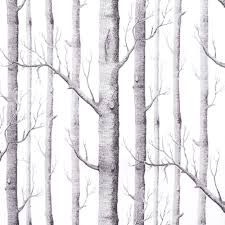 Image result for wallpaper birch tree