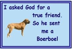 Boerboel owners - just for you - one of over 200 breeds in our ebay store.
