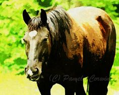 black horse painting – Etsy
