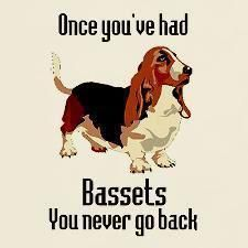.Sooooooo very true.  My first was when I was yet a young boy. My next was when I was first married and the next one was a few years later and my last was in 1998. Now I'm too physically handicapped to look after a Basset but anytime i see one even when I'm driving in my car I stop to pat and chat.