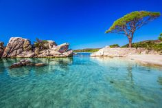 Pine Tree And Beautiful Lagoon On Palombaggia Beach, Corsica, France Stock Image - Image of picturesque, europe: 79265353 Corsica, Bora Bora, Mykonos, Glamping, Last Minute Vacation Deals, Popular Holiday Destinations, Ancient Buildings, Les Cascades, Excursion