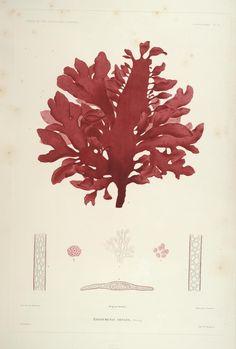 Seaweeds I Voyage au Pol Sud et Dans L'Oceanie