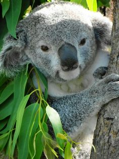 Hello my dearest koala did you have a nice nap?