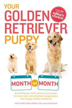 Nombres Golden Retriever, Golden Retriever Names, Golden Retriever Training, Golden Retrievers, Training Your Puppy, Training Tips, Brain Training, Puppy Care, Dog Care