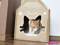 Koty uwielbiają chować się w różnego rodzaju pudłach, kartonach, doniczkach, szafach, torbach. Dlaczego tak się dzieje? Okazuje się, że koty czują się bezpiecznie w miejscach, w których mogą się schować. Obniża to stres u tych zwierząt, a także pozwala ogrzać się i utrzymywać odpowiednią temperaturę ciała. Śmieszą nas filmiki z kotami w różnego rodzaju pudełkach, [...]