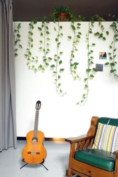 New Home Decor Plant Trend: The Pothos Plant | Apartment Therapy