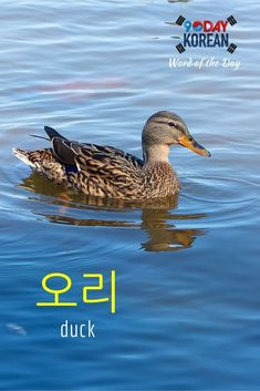 """Here's today's Korean word of the day!  The word  means duck.""""  If you cant read this word yet, download our free EPIC Korean reading guide by clicking the link in our bio and well teach you in 60 minutes.  Repin if this was helpful!"""