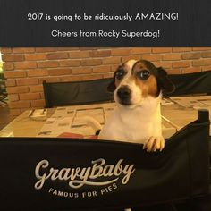 Cheers to 2017 buddy! Amazing Adventures, Cheers, Dogs, Fun, Animals, Animales, Animaux, Pet Dogs, Doggies