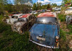 un vieux cimetiere de voitures en suede 1   Un vieux cimetière de voitures en Suède   voiture vintage Suède seconde guerre mondiale photo mo...