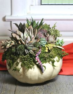 """Are you looking for an easy to care for """"green"""" fall arrangement? Try these DIY Pumpkin Succulent Planters. White Pumpkin Centerpieces, Thanksgiving Centerpieces, Pumpkin Planter, Diy Pumpkin, Pumpkin Flower, White Pumpkins, Fall Pumpkins, Planting Pumpkins, Succulents"""