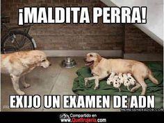 ADN  #meme