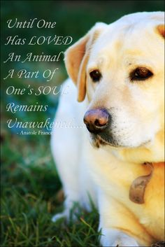 A beautiful and true quote......and our gorgeous labrador, Lady.