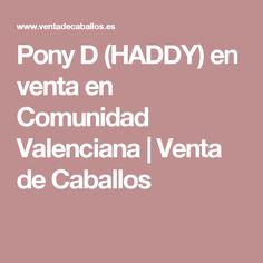 Pony D (HADDY) en venta en Comunidad Valenciana | Venta de Caballos