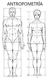 Resultado de imagen para antropometría