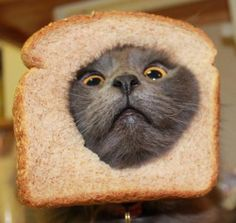 www.breadedcats.com   This is so dumb but we found ourselves looking and laughing then trying to find bread and a cat!  (No!!! NOT Phoebe....just some random breaded cat that caught my eye.)