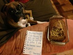 Dog Shame... Peaches loves banana bread.  Yum, yum!  Smells so good, couldn't resist so there.....