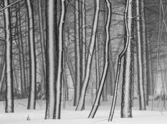 From National Geographic...  Amazing Picture of trees in snow...  Looks more like a great painting than a great photograph!