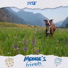 Pità #Mongesfriends