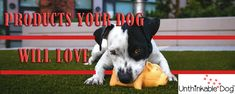 Come visit our site. Since spring is now here we are offering off with promo code SPRINGSALE limited time Pocket Dog, Dog Car Seats, Dog Shop, Cat Feeding, Flea And Tick, Fleas, Your Dog, Dog Cat, Puppies