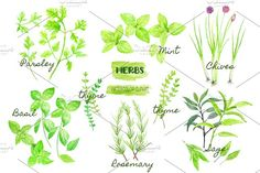 Watercolor Clipart Herb Collection by Corner Croft on @creativemarket