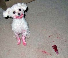 white poodle red lip gloss!