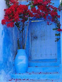 Flowering bougainvillea at the doorway of the blue house in Chefchaouen, Morocco ✫♦๏༺✿༻☘‿MO Jul ‿❀🎄✫🍃🌹🍃🔷️❁`✿~⊱✿ღ~❥༺✿༻🌺♛༺ ♡⊰~♥⛩⚘☮️❋