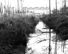 Black and White Alabama Landscape Photography by FeatherWindStudio