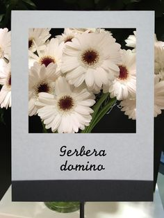 ガーベラ (ドミノ)  #flower #shop #matilda #中目黒