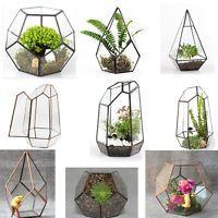 Bonsai Modern Glass Geometric Terrarium Tabletop Succulent Fern Moss Box Case