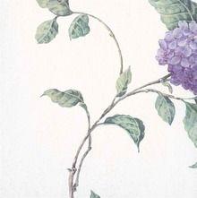 Purple Hydrangea Blossom Wallpaper